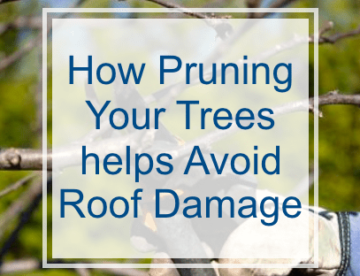 How Pruning your Trees Helps Avoid Roof Replacements